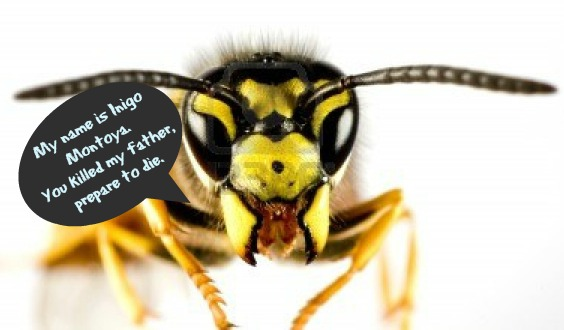 head-of-wasp-with-text